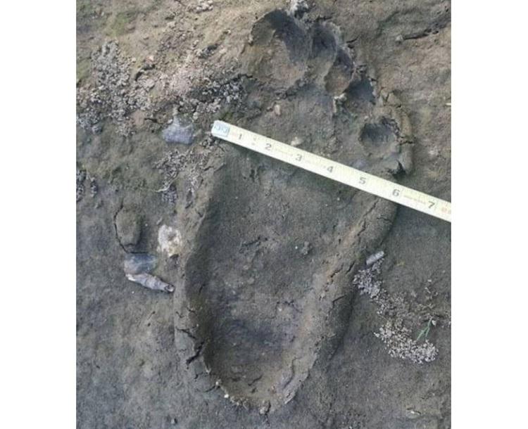 Огромные отпечатки босых ступней обнаружил на своем участке житель Канады