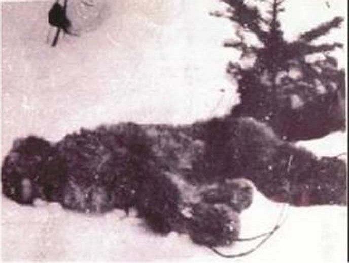 Странная история с самой старой известной фотографией убитого йети