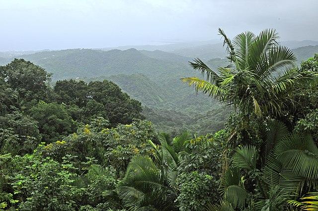 Встречи с инопланетянами в лесу Пуэрто-Рико