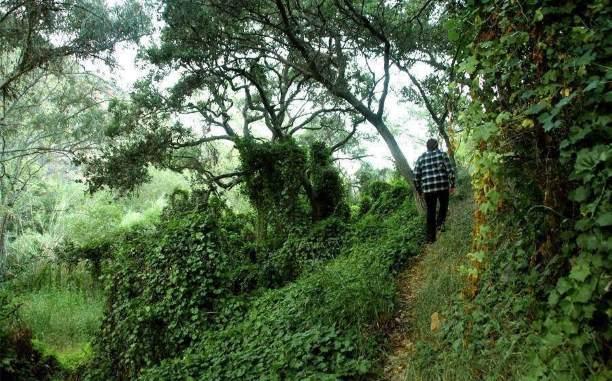 Обряды с жертвоприношениями, ведьма и дети-призраки: Тайны Эльфийского леса в округе Сан-Диего