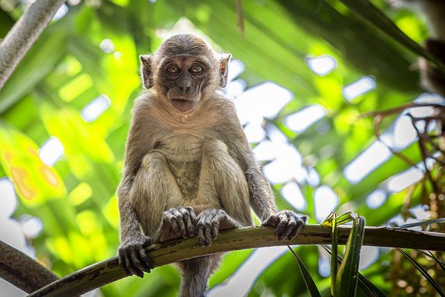 Созданы первые гибридные эмбрионы человека и обезьяны