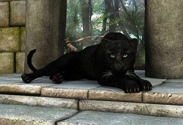 В Чешире люди стали все чаще видеть огромных черных кошек