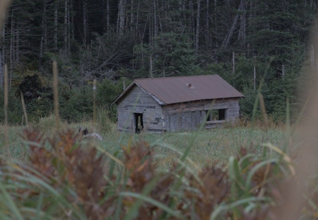 После того как йети убили десятки человек, из городка на Аляске сбежало все население