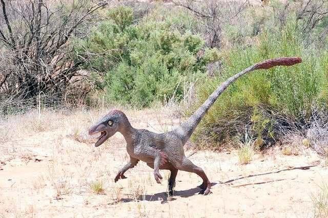 Динозавр на заднем дворе: На камеру наблюдения попало существо, похожее на велоцираптора
