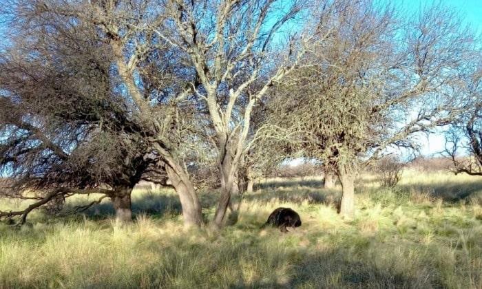 На следующий день после наблюдения НЛО фермер нашел изувеченное тело коровы