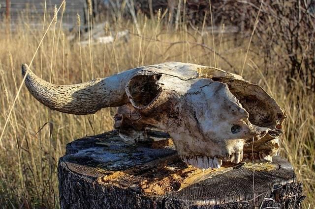 Странный летательный аппарат похитил и жестоко убил корову в 1897 году