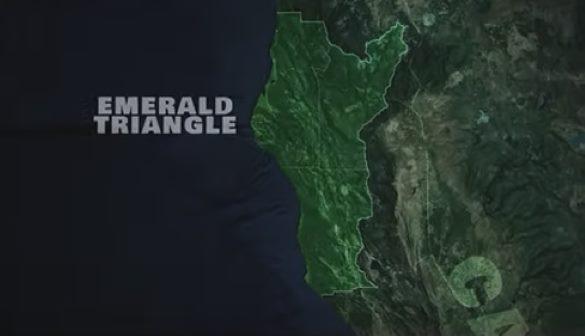 В 2018 году режиссер-документалист решил снять фильм о йети и узнал, что они убили людей на плантации марихуаны