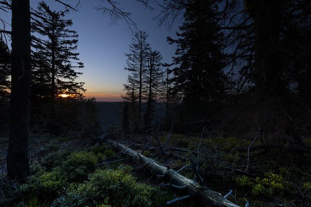 Охотник встретил в лесу голого дикого человека, который женским голосом просил о помощи