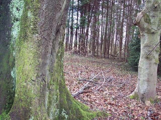 Лес Гроувли-Вуд, по которому бродят призраки четырех убитых ведьм и повешенного браконьера