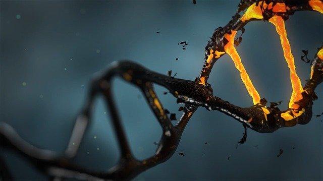 Обнаружены возможные следы ДНК динозавров