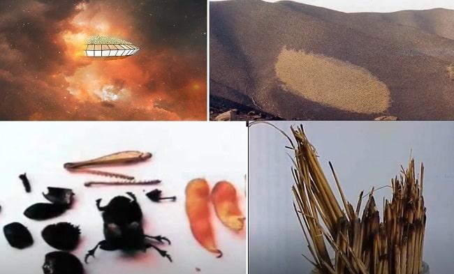 В 1986 году в Аргентине НЛО сжег холм, «высосал» из насекомых внутренности и забрал хлорофилл из дерева
