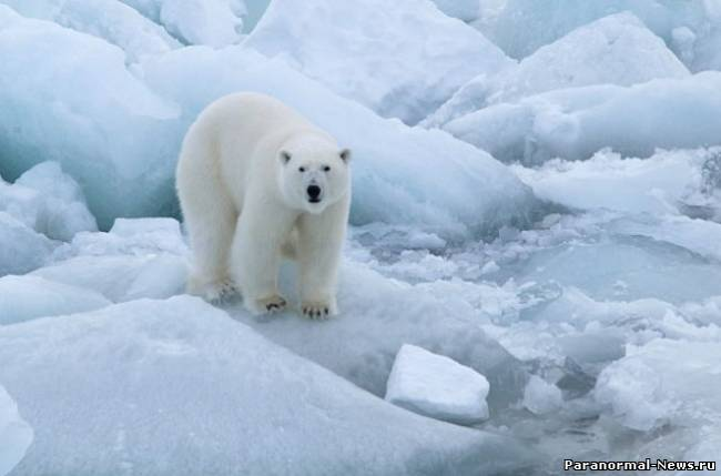 Американцы связывают суровые морозы в России с таянием Арктики