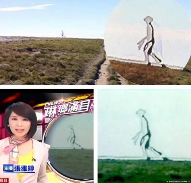 Восьмифутовое существо засняли на Тайване