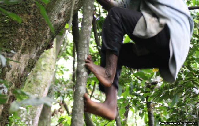 """В Африке изучили племя пигмеев с """"обезьяньими"""" ногами"""