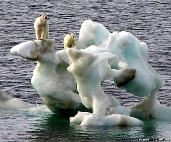В прошлом году климат Земли очень сильно изменился