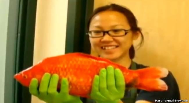 Гигантская золотая рыбка обнаружена в озере Тахо, США