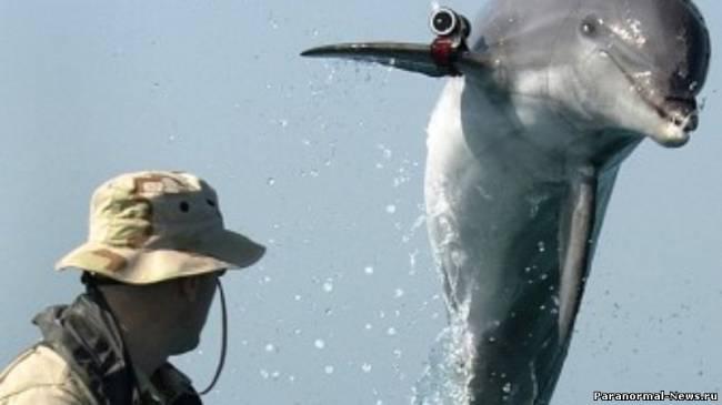 С Украинской военной базы сбежали боевые дельфины