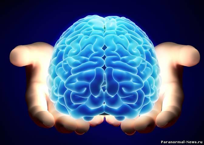 Мозг головной фото