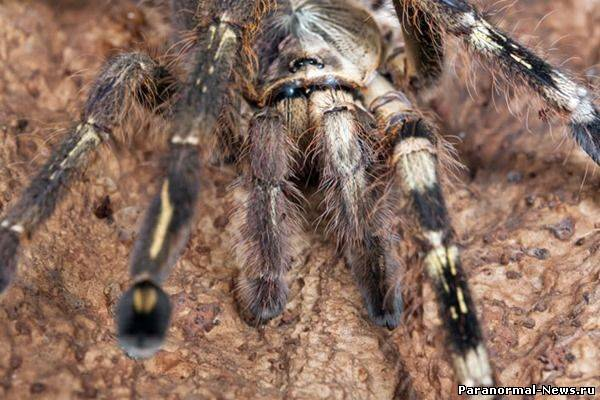 Гинандроморф - самец и самка в одном теле (16 фото)