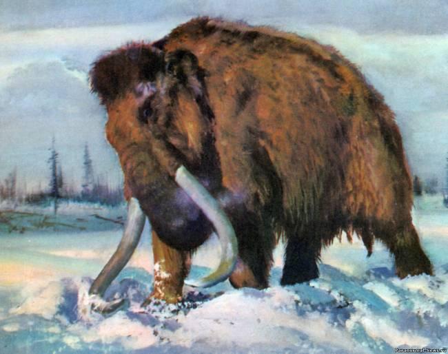 В Якутии нашли нового мамонта и могут отправить его на клонирование