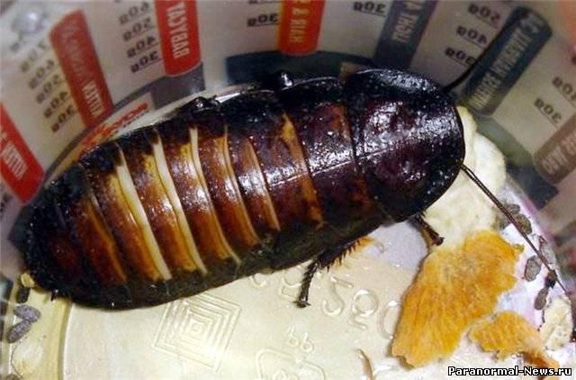 паразиты живущие в организме фото