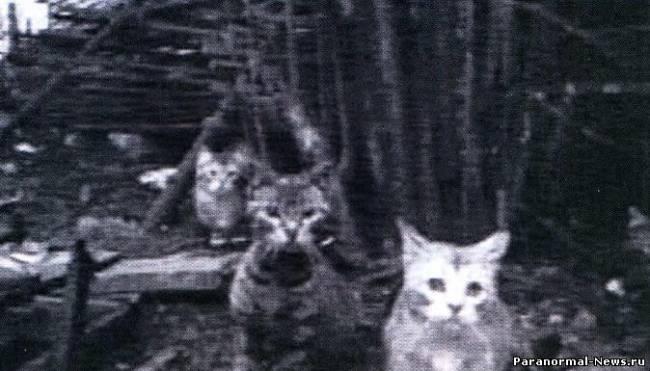 Эстонский подземный неопознанный объект приманивал к себе толпы кошек