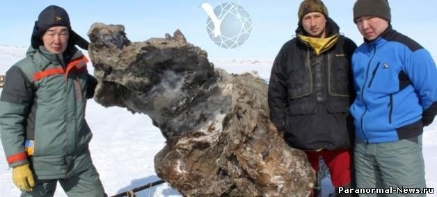 Сенсация: В Якутии откопали удивительно свежего мамонта
