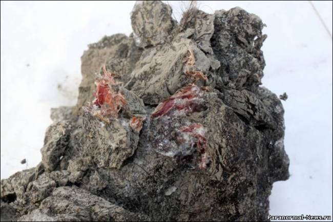 Почему у ископаемого мамонта не замёрзла кровь? (6 фото)