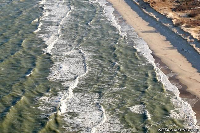 На Куршской косе аномальный мор жуков (4 фото)