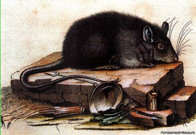 Крыса и нечисть (рассказ-быль)