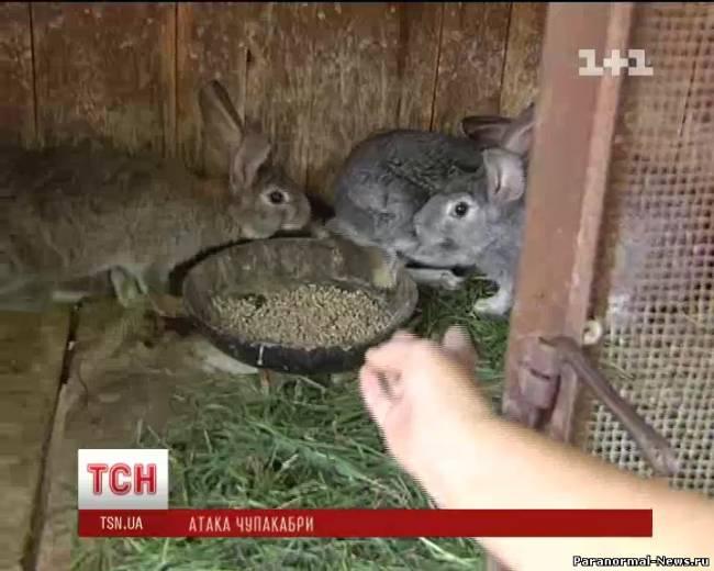 В Украине снова бушуют страсти по Чупакабре