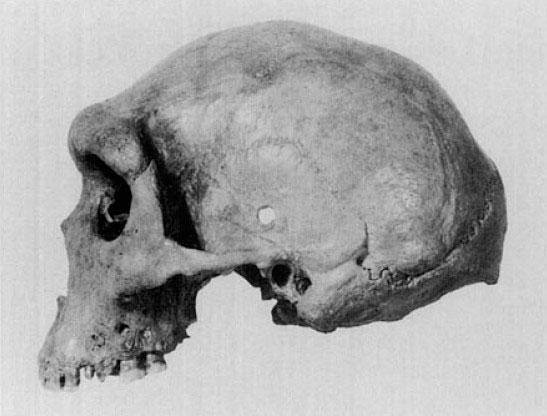 """""""Простреленные черепа"""" не дело рук пришельцев"""