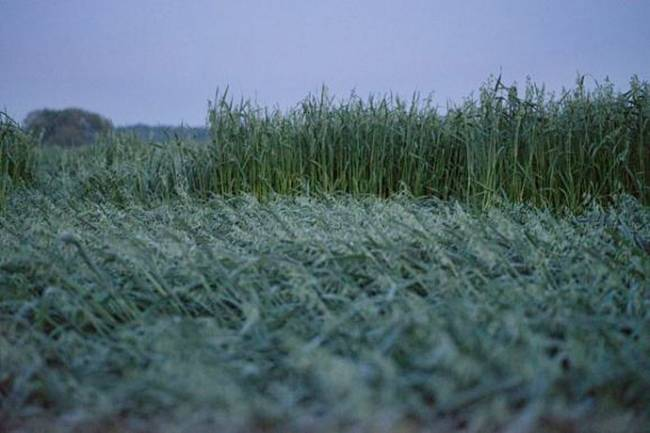 Узоры на полях Серпуховского района (6 фото)