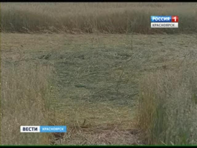 Круги на полях Красноярска