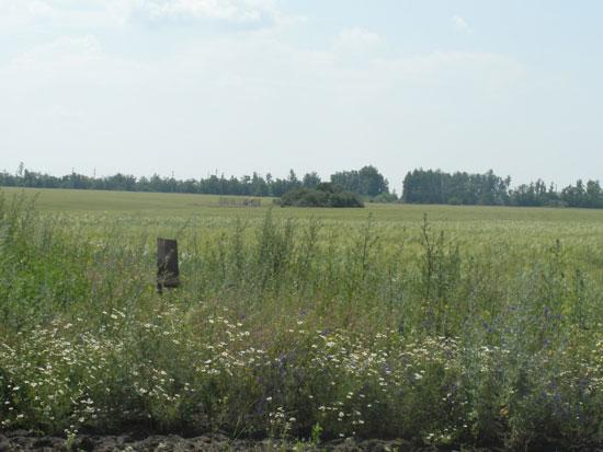 Кто-то в поле стал ходить... или наблюдение НЛО в Каменке