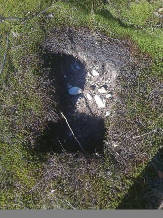 Под Ухтой нашли странные вырезы грунта в виде форм и рисунков (11 фото)