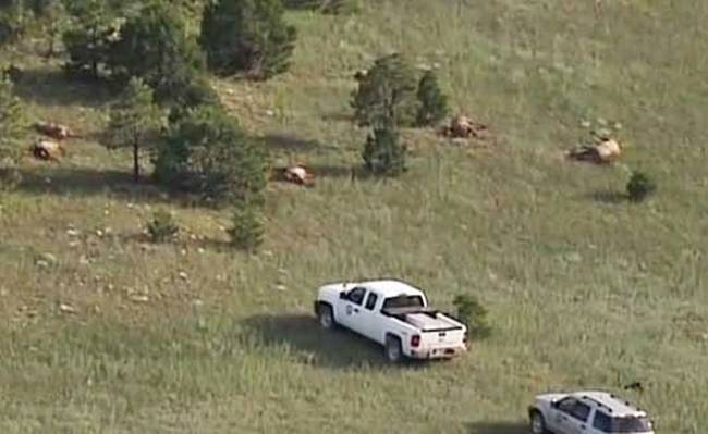 В Нью-Мексико нечто убило 120 оленей рядом с кругом на полях (+Видео)