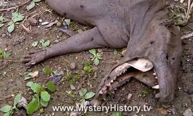 """Очередной """"труп чупакабры"""" найден в джунглях Венесуэлы"""