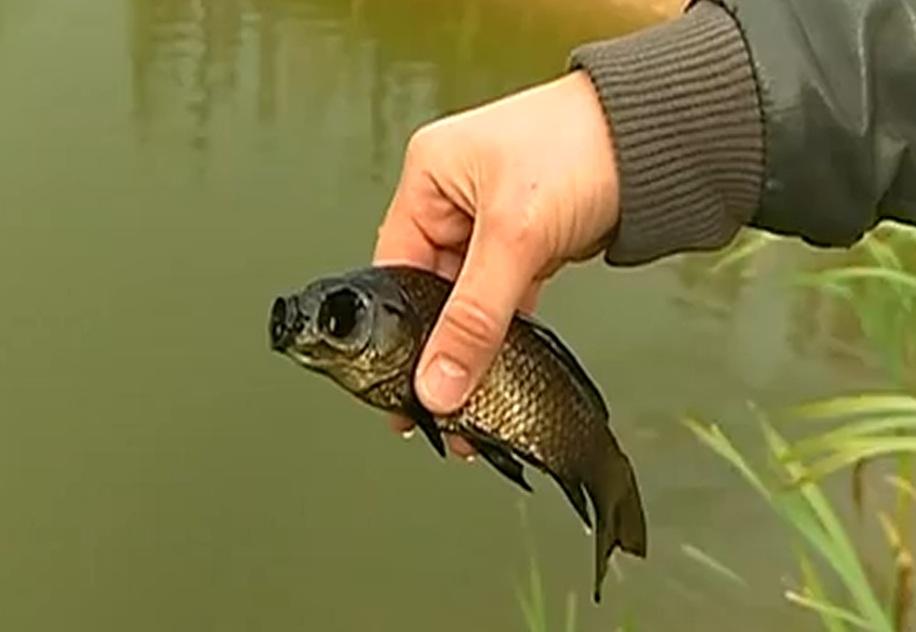 как ловить карася в маленьком пруду