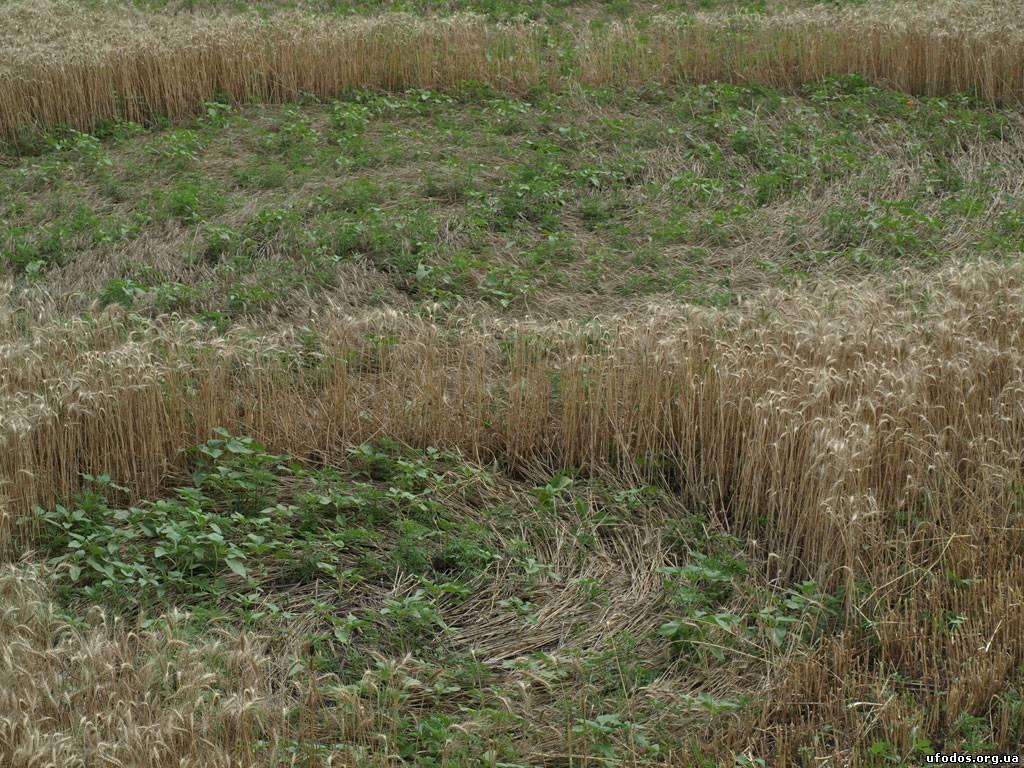 Исследование кругов на полях в украинском селе Григоровка