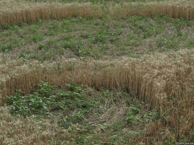 Исследование кругов на полях в украинском селе Григоровка (+Видео)