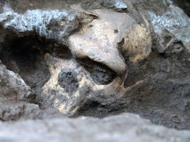 Найденный в Грузии череп может изменить представление о предках людей