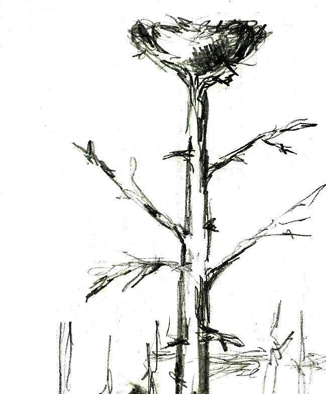 Гигантские птицы в небе Якутии (4 фото)