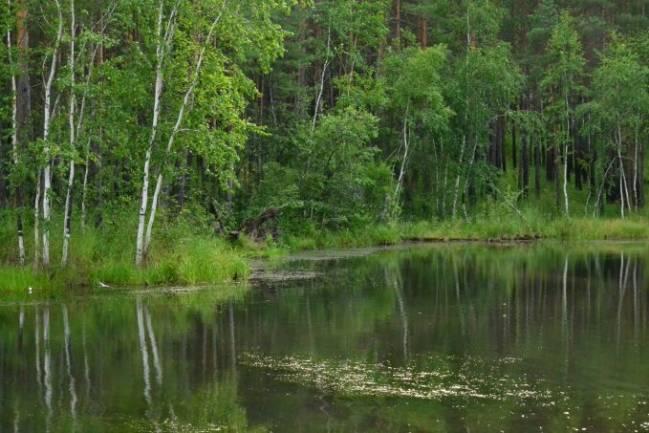 Происшествие на лесном озере (рассказ из детства)