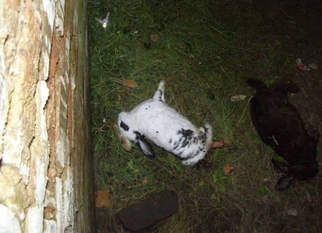 Встречи с оборотнями в России Украинская чупакабра невероятно умна и обладает недюжинной силой (4 фото)