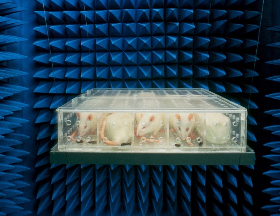 сенсорная депривация мумификация форум