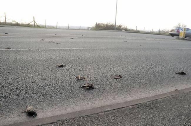После странного хлопка на дорогу посыпались мертвые птицы