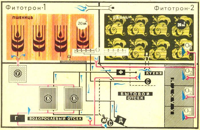 Схема газо— и водообмена в