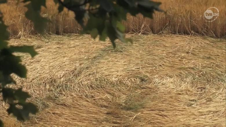 Круги на полях возле польского села Орхово