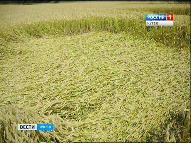 Необычные узоры на полях Курской области